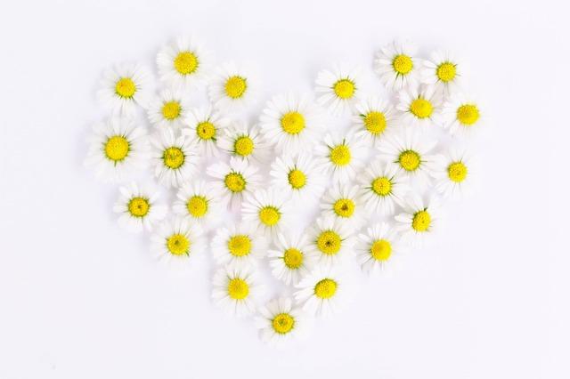 デイジーの花でつくったハート型